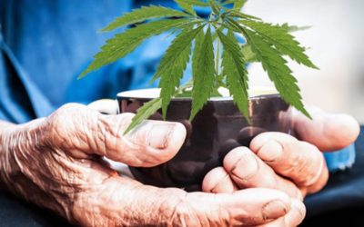 Why Seniors are Turning to Cannabis