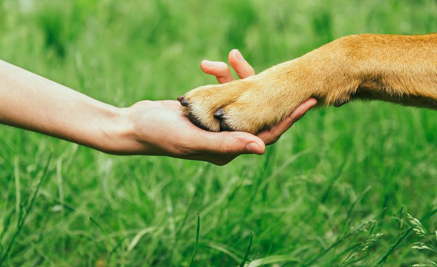 Your Pet Has an Endocannabinoid System